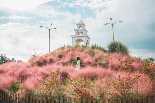 10월 제주도 가볼 만한 곳 제주허브동산, 핑크뮬리 축제·할로윈 축제 개최